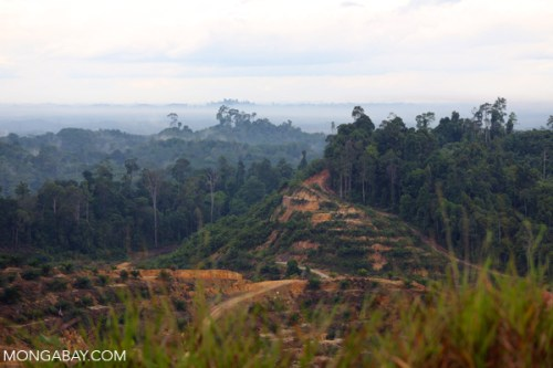 Forest cleared and planted with oil palm in Miri, Sarawak. Photo by Rhett A. Butler.