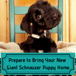 Prepare to Bring Your New Giant Schnauzer Puppy Home