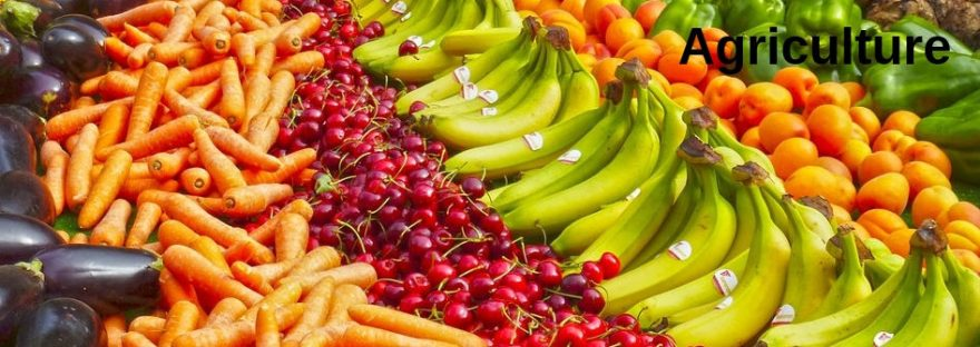 A selection of brightly coloured fruit and vegetables including carrots, cherries, and bananas