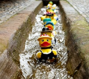 Little yellow plastic ducks all lined up and swimming down a gutter