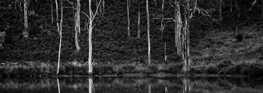 A black and white photo of trees next to a billabong
