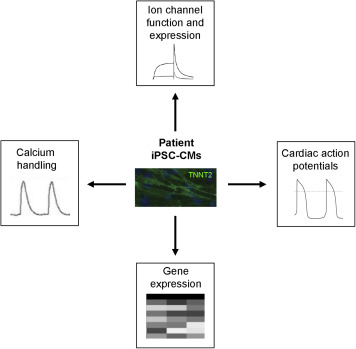 Induced pluripotent stem cell technology and inherited