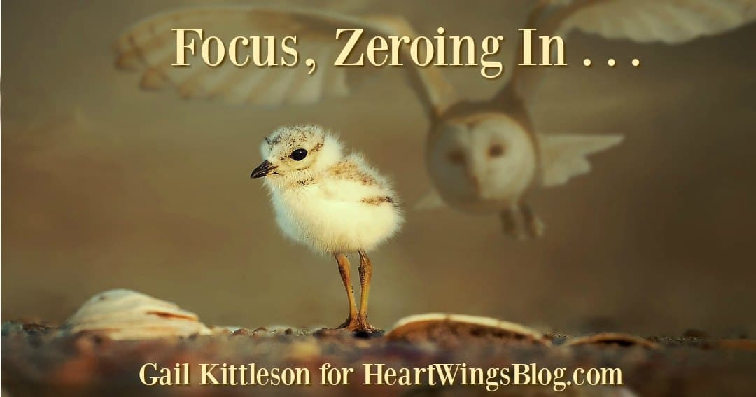 Focus, Zeroing In . . .