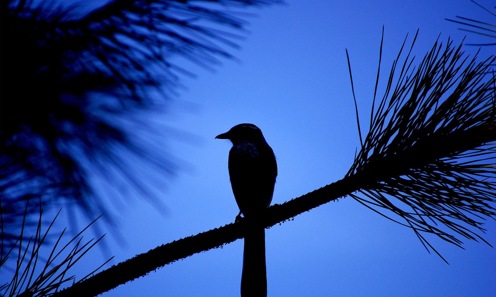 Blue + Bird by John Verive