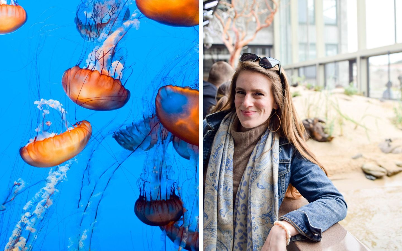 carmel-by-the-sea - monterey bay aquarium
