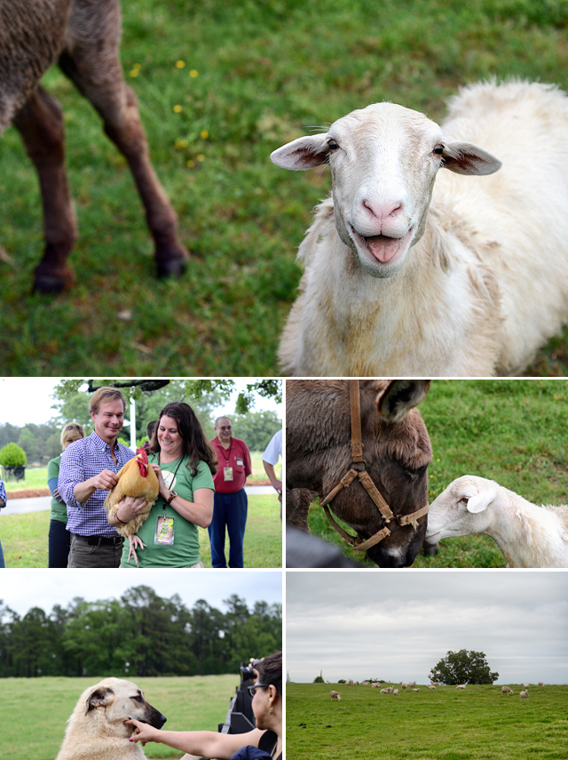 P. Allen Smith's Moss Mountain Farm // Arkansas Women Bloggers // Arkansas Soybean Promotion Board #Bean2Blog