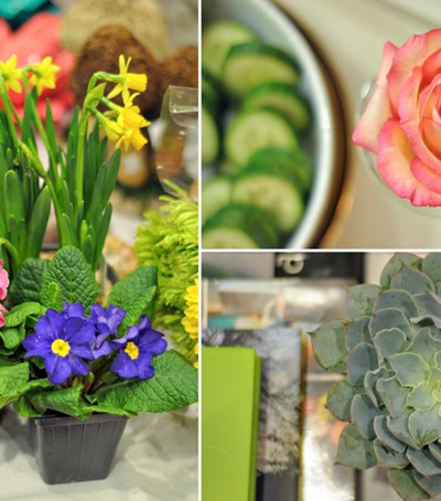 Bloggers in Bloom + Arkansas Flower & Garden Show GIVEAWAY || HeathersDish.com #giveaway