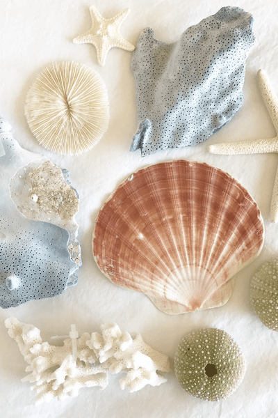 Lovely links with @heathersdish (gorgeous seashell photo courtesy of @lindseyfalls)