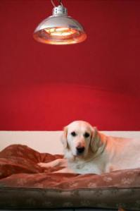 What are heat lamps for dogs? - paperwingrvice.web.fc2.com