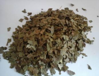 walnut-leaves-dec-16