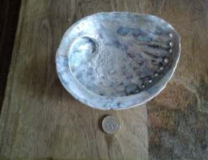 Abalone shell. 3.jpg.jpg