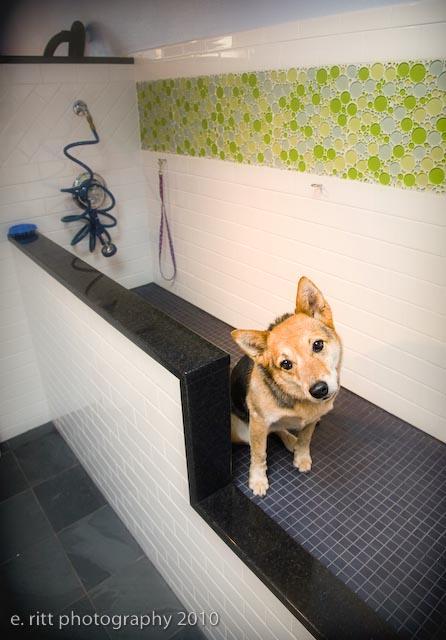 Self service dog wash the best dog 2018 self serve dog wash kleen rite solutioingenieria Choice Image