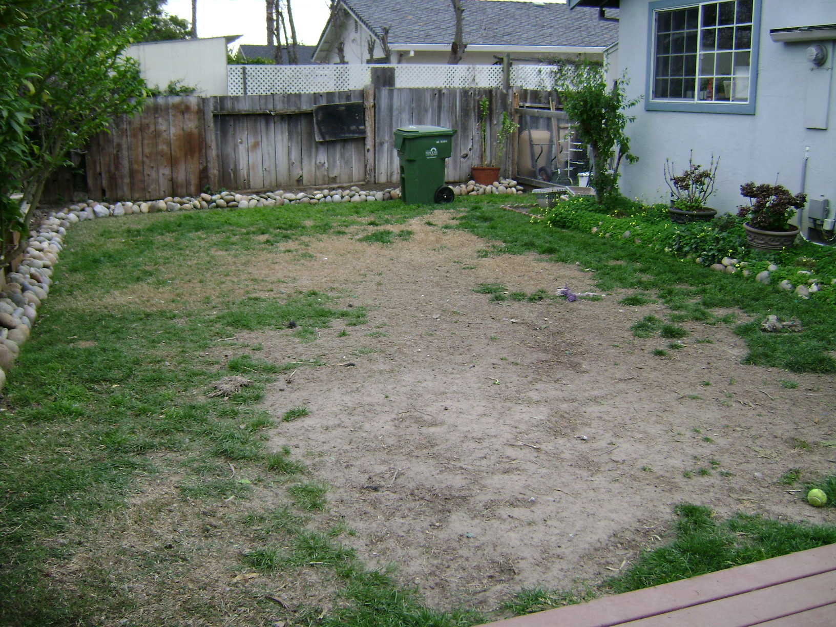 ground cover dogs yard