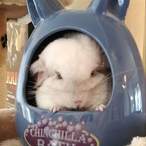 Legolas, what a cutie!