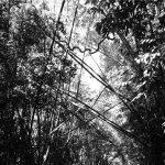 andrew-pekler-tristes-tropiques