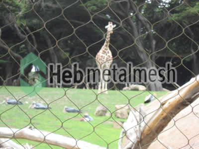 wire mesh for giraffe cage mesh, giraffe perimeter netting, giraffe roof netting supplies