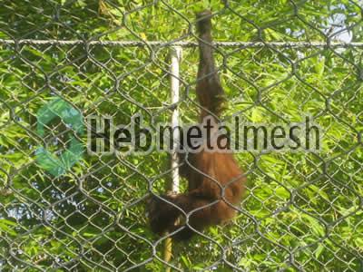 stainless steel gibbon roof netting,gibbon perimeter mesh, gibbon fencing