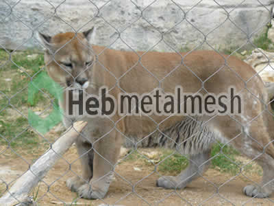 lion cover mesh, lion fencing, lion safety netting for sale