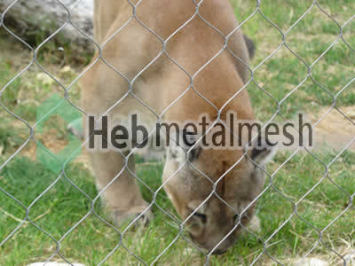 stainless steel lion roof netting,lion perimeter mesh, lion fencing