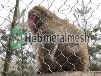 mesh for monkey control mesh, monkey enclosure mesh, monkey cover manufacturer