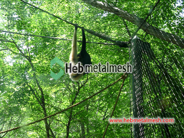 Animal fence, animal enclosure mesh – SS wire rope woven zoo mesh ...