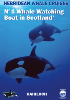 Brochure Whale watching