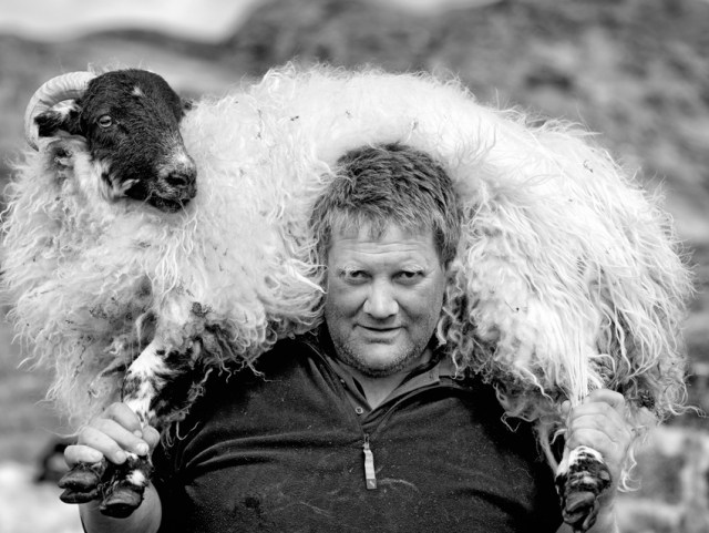 Harris Tweed image of crofter carrying a sheep by Ian Lawson