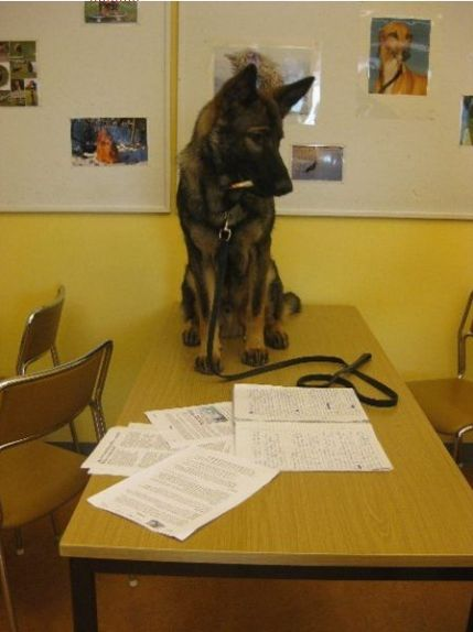 Aragorn som lärarassistent