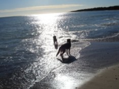 Luna & Zac på stranden