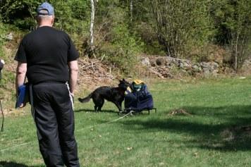 H. Öska (Kaxa) undersöker släden