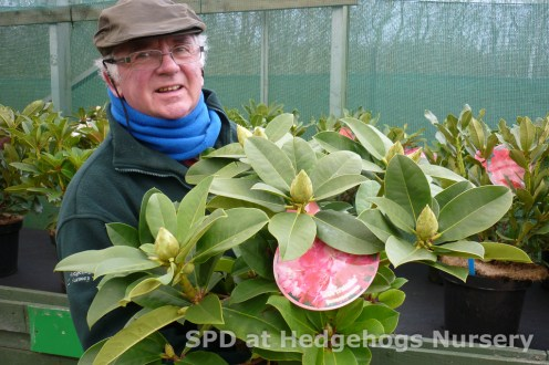 rhodos at Scot Plants Direct at Hedgehogs Nursery