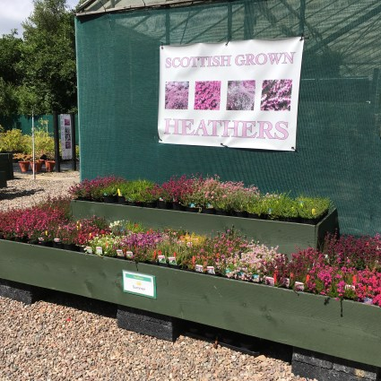 Heathers fro spring gardens