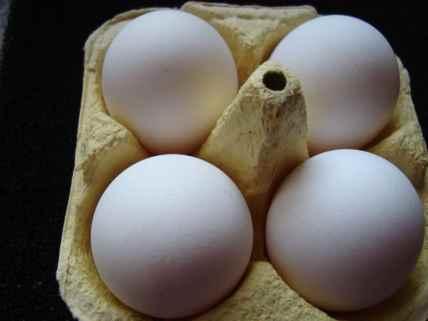 Large White Leghorn egg