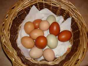 Multicoloured Eggs in Basket