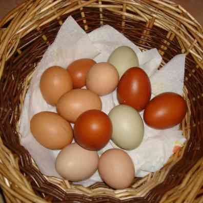 Multicoloured Eggs in Basket