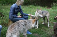 Journalistin Hedi Grager im Wolf Science Center (Foto Manfred Staniek)