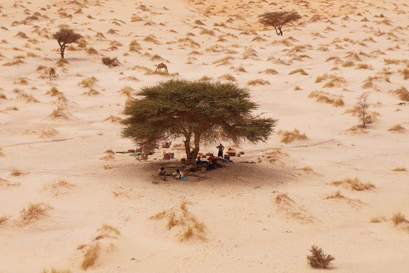 Adrar - A l'ombre de l'acacia
