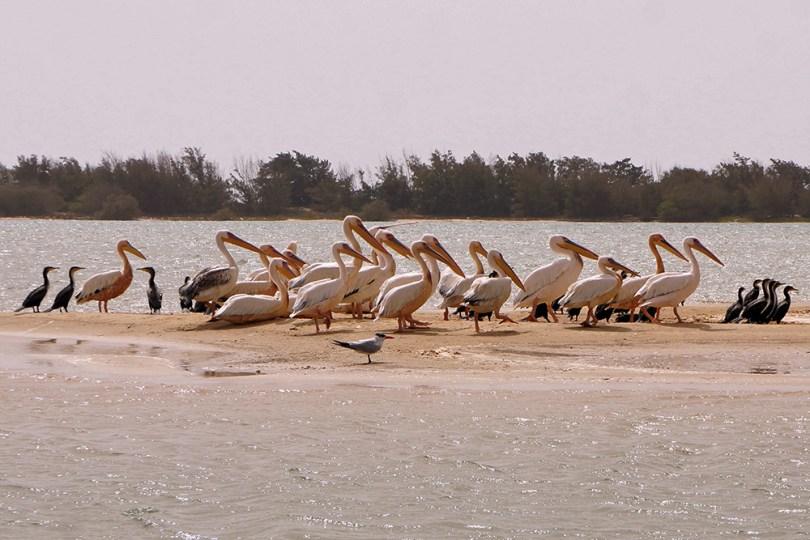Saint-Louis du Sénégal - Parc de la langue de Barbarie