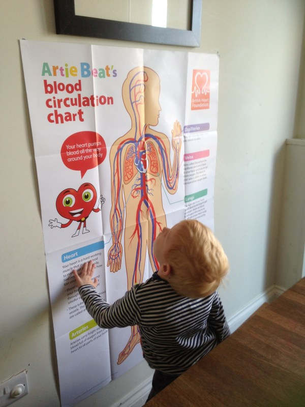 Great Free Resources British Heart Foundation Hedni