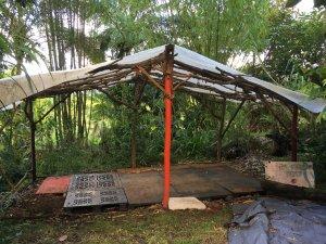 Rainforest Campsite