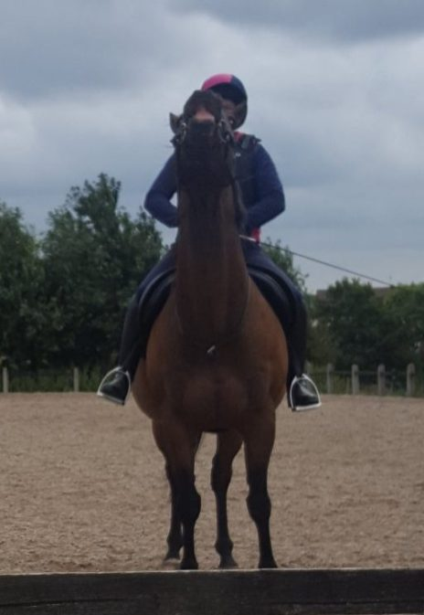 Meeting and riding Olly for the first time since 2013.