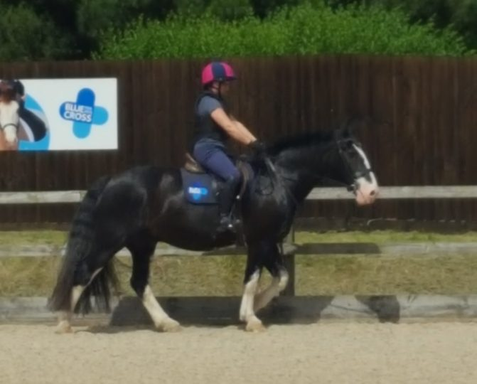 Riding Shadow, Blue Cross' Schoolmaster