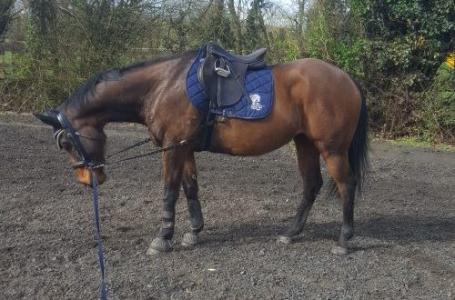 Spring Time Lunging Olly 2
