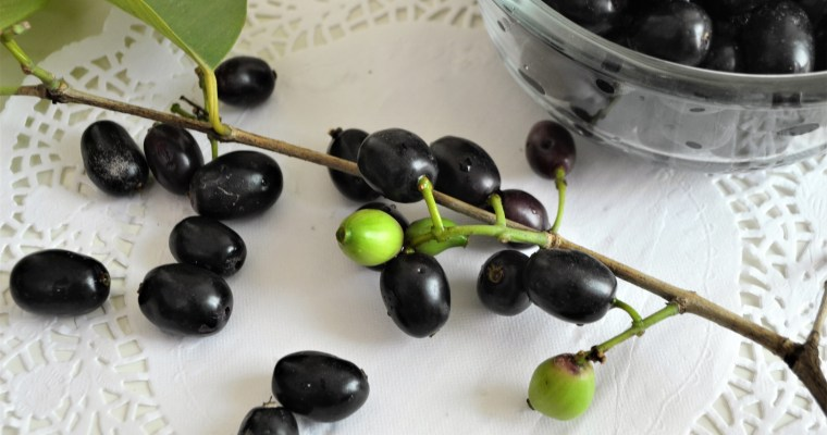 Wednesday Wisdom: Jamun/ Java Plum/ Jambul