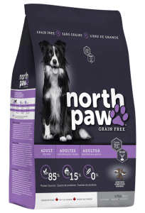 north paw chien adulte