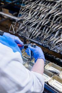 les sardines sont parés avant la mise en boite.