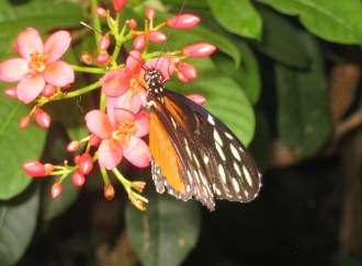 Butterfly with pink flower