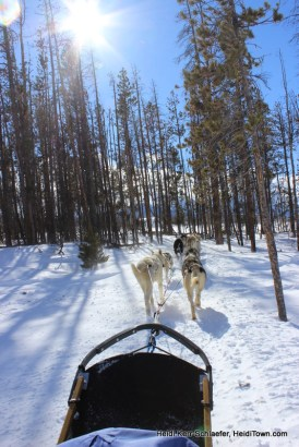 WP Dog Sled  through the woods HeidiTown