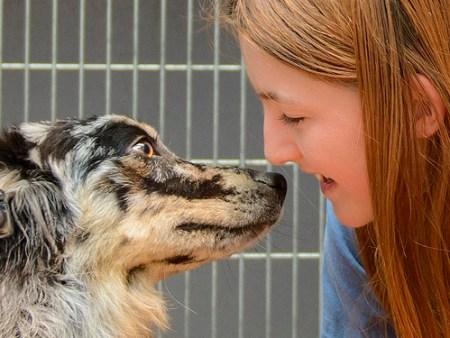 NMDR dog photo