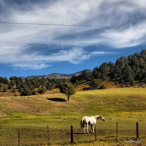 a horse in Ridgeway Colorado